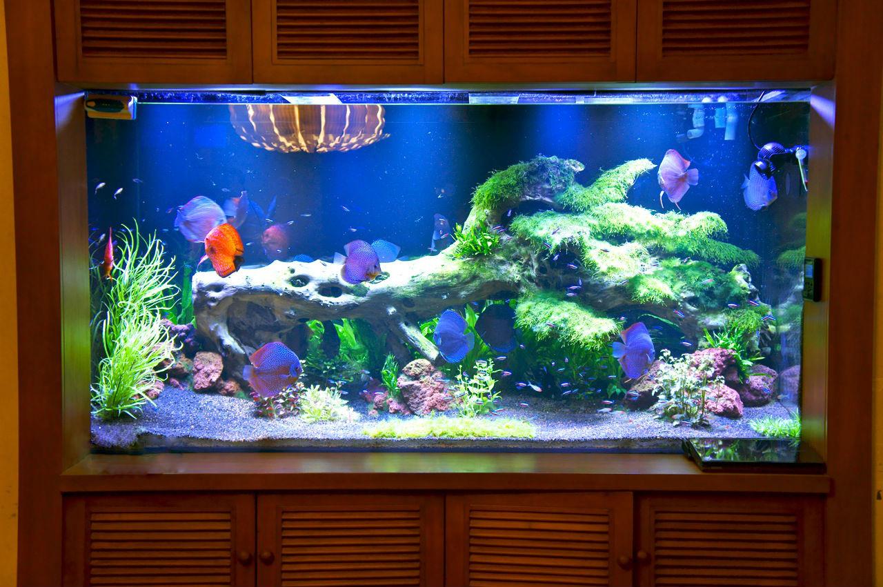 Фото Обслуживание, чистка, изготовление аквариумов 3