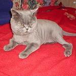 Стрижка кошек и котов без садации и наркоза