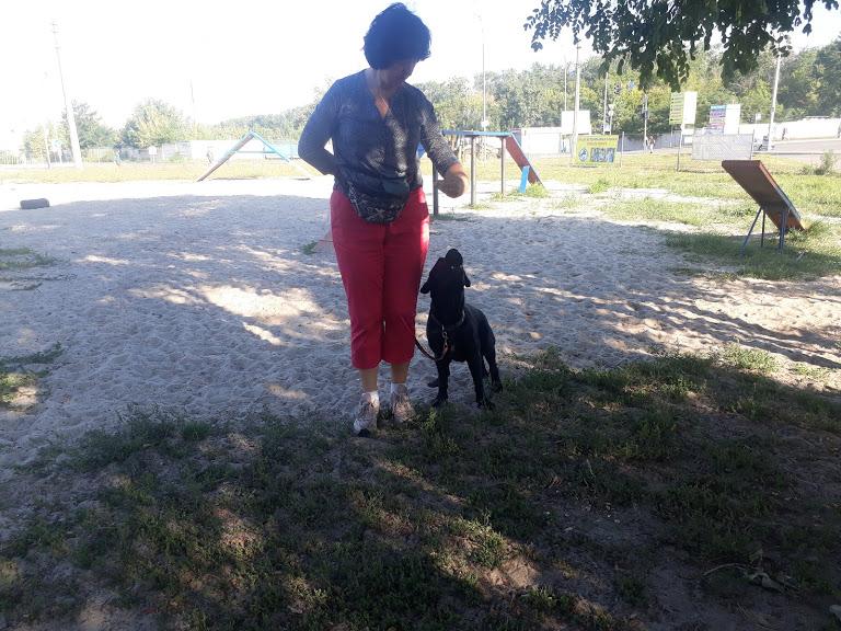 Фото Коррекция поведения - агрессия на собак.