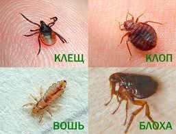 Фото Борьба с бытовыми насекомыми  1