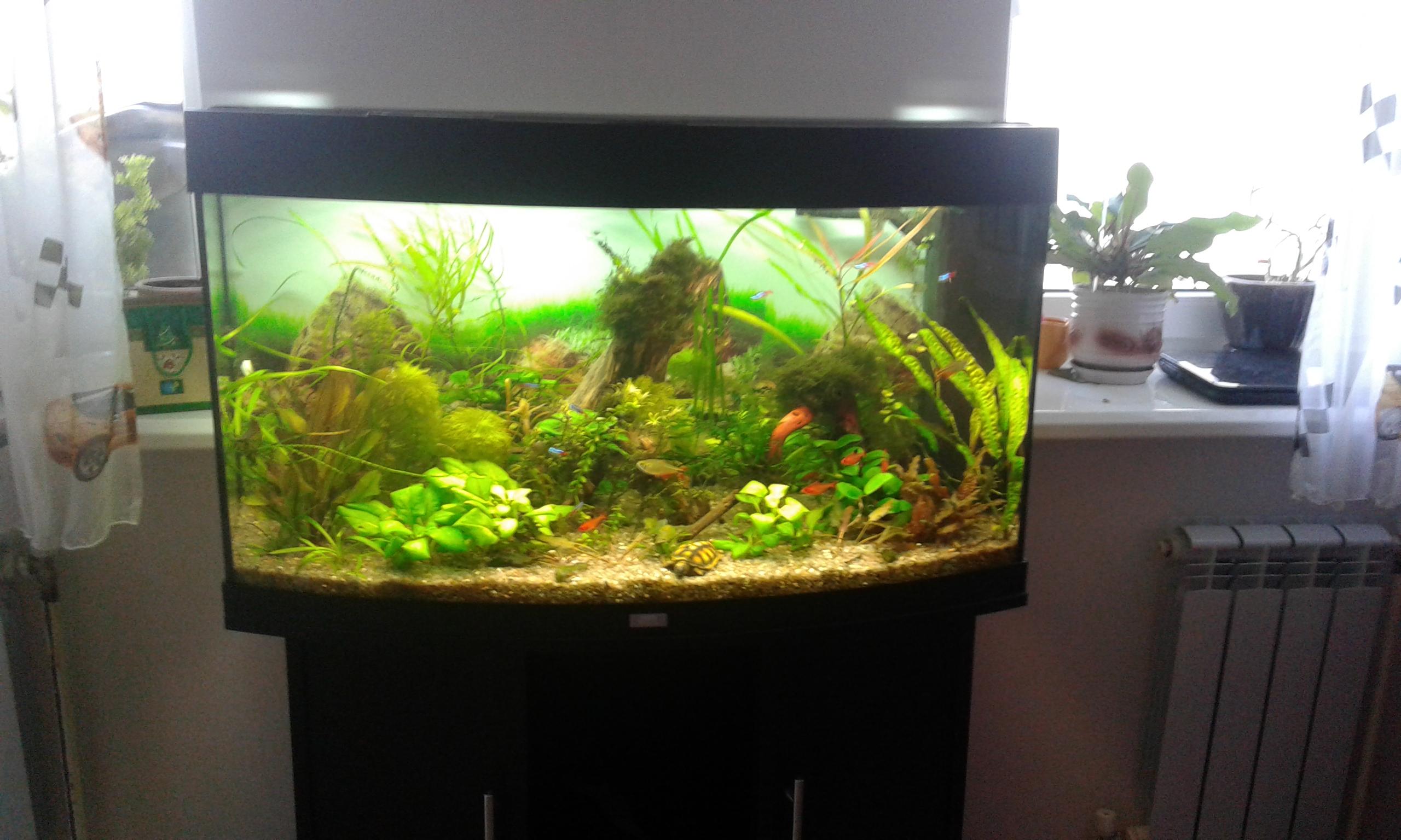 Фото Чистка аквариума 2
