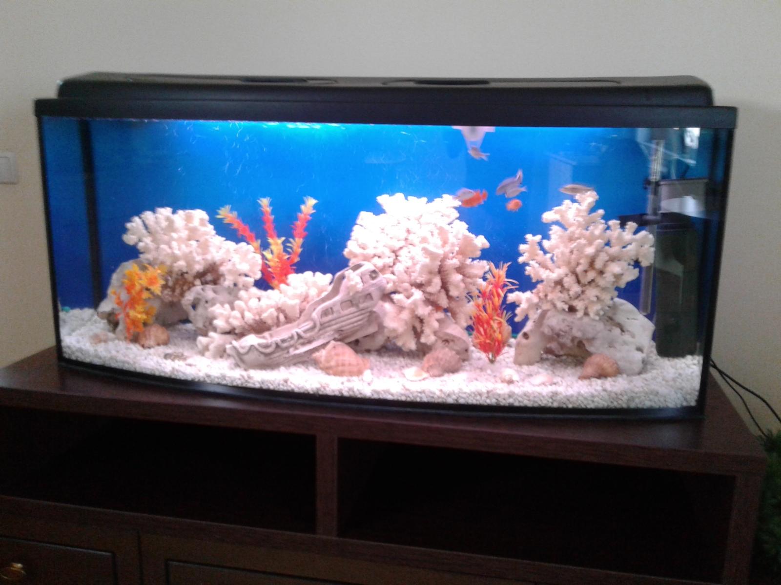 Фото Чистка аквариума 1