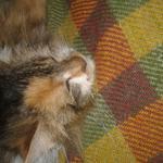 Мою котов( не сфинксов и не сиамских)
