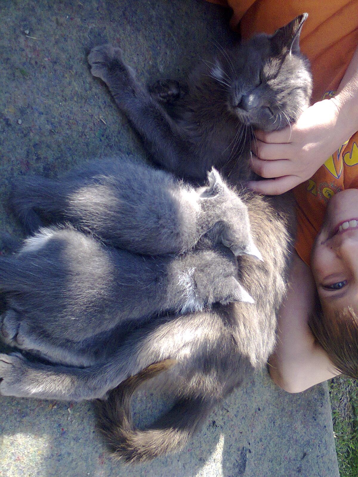 Фото Передержка собак и котов на время 3