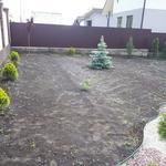 Рулонный и посевной газон под ключ