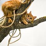 Гостиница для кошек Мур-Мяу