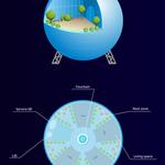 Разработаю инфографику