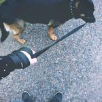 Выгул собак Сумы