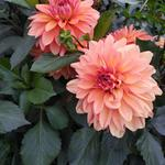 Консультации по саду и огороду