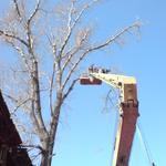 Спил деревьев Киев. Обрезка веток. Удаление деревьев. Корчевание пней.