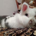 Перетримка гризунів)Кролики,шиншили,хомячки.