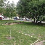 Стрижка газона (покос травы)