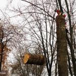 Аварийные,спил-вырезка-зрізання-зрізати-видалення деревья-дерев киев
