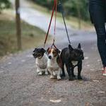 Выгул собак в вашем раёоне