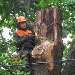 Спил деревьев киев