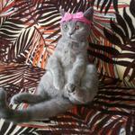 Передержка котов