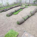 Автополив, рулонный газон, садовництво