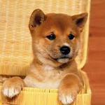 Передержка собачек:)