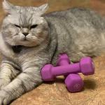 Перетримка котиків