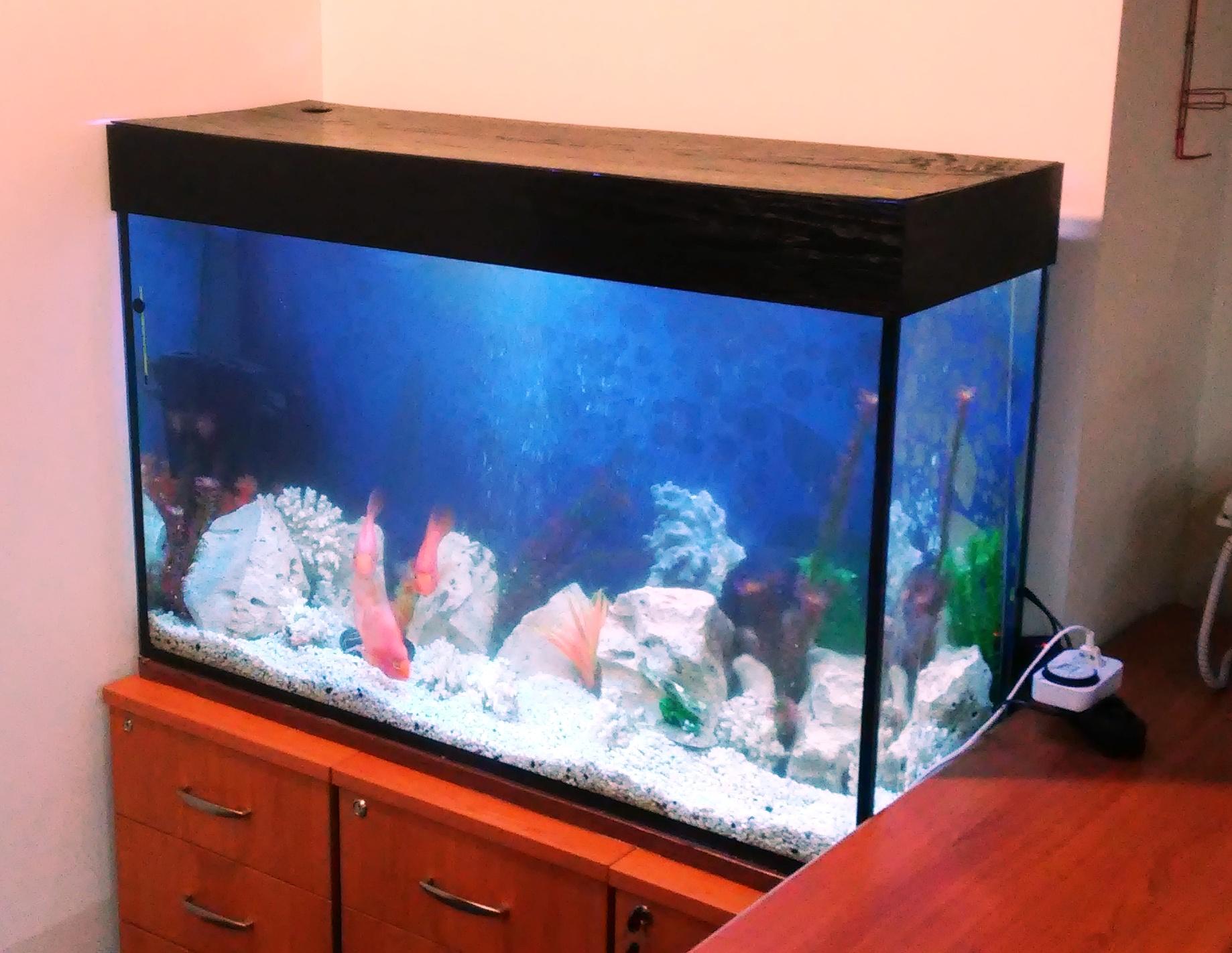 Фото Обслуживание, чистка, изготовление аквариумов 1