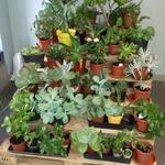 Пересадка и посадка комнатных растений