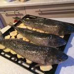 Фарширована Риба, Стегна