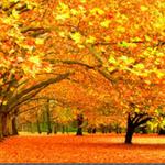 Переработка опавшей листвы вермикультурой или раствором