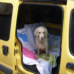 Перевозка домашних животных