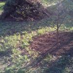 Сезонные садово - огородные работы.