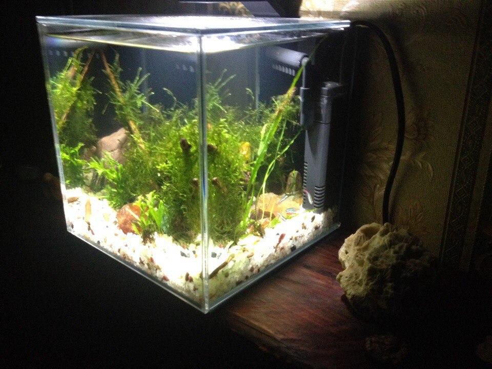 Фото Оформление нано аквариума.