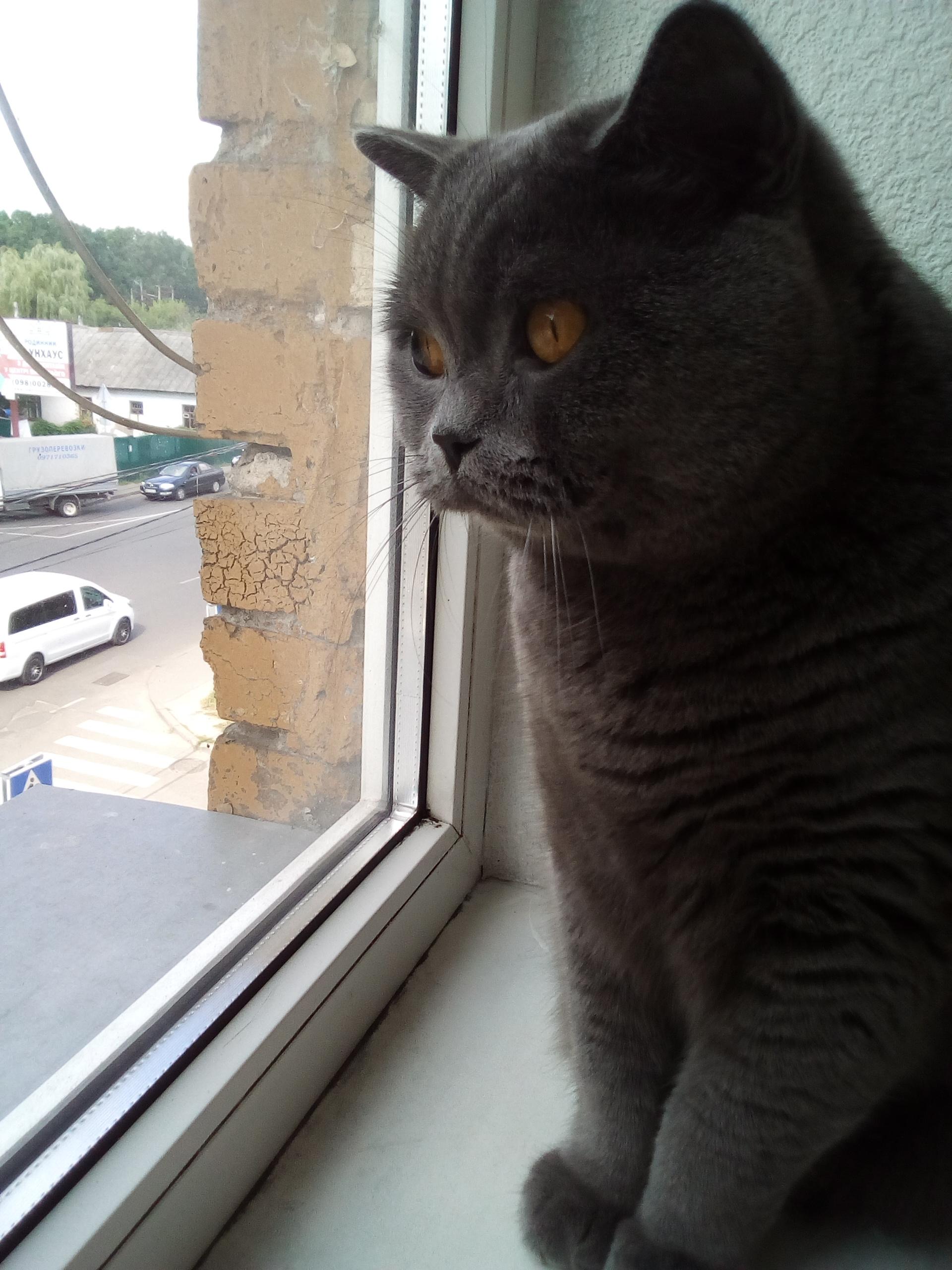 Фото Передержка котика)