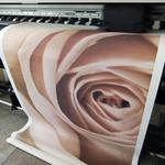Широкоформатная печать в фотографическом качестве. Фотообои. Бэклайты.