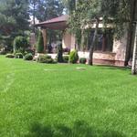 Устройство рулонного или посевного газона любой сложности.