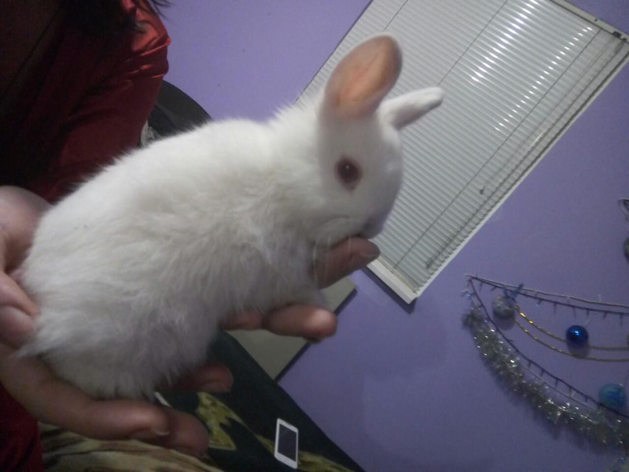 Фото Консультации по уходу за декоративными кроликами 1