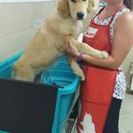 Мытье собак профессиональными средствами для животных