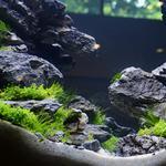 Установка и дизайн аквариумных систем любой сложности
