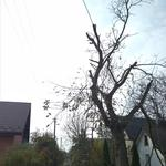 Зрізання дерева, порізка дров