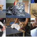 Стрижка котов в салоне и с выездом на дом