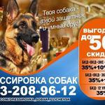Дрессировка собак Одесса