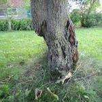 Видалення та корчування дерев