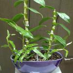 Комнатные растения и Неповторимые подарки ручной работы