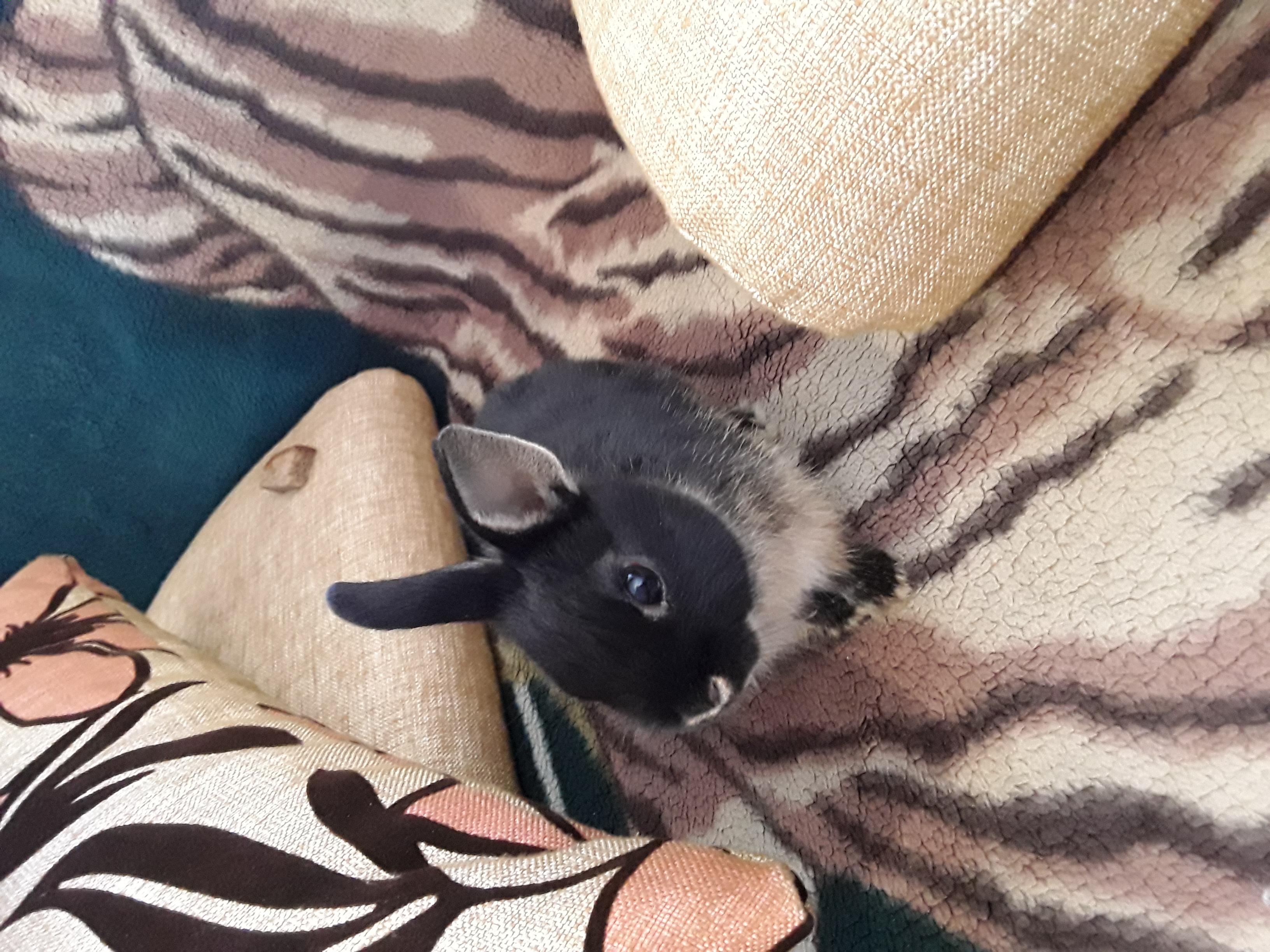 Фото Консультации по уходу за декоративными кроликами 4
