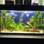 Помогу с запуском и чисткой аквариума