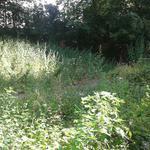 Озеленение придомовой территории г. Киев, Шевченковский район