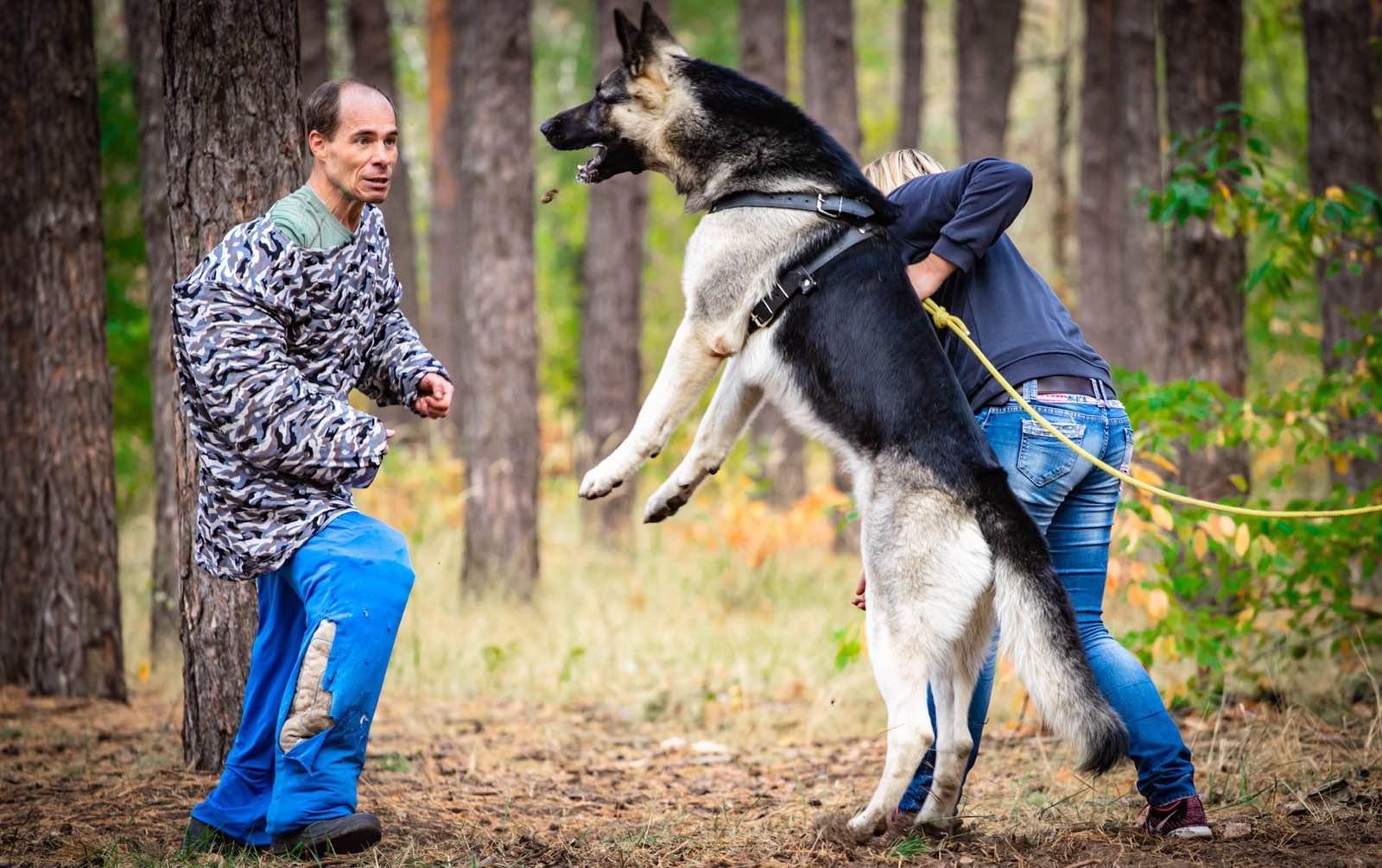Фото Дрессировка собак. 1