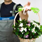Доставка квітів та подарунків Рівне