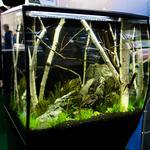 Чистка аквариумов