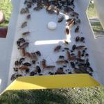Уничтожение тараканов в Харькове