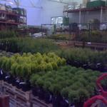 Ландшафтный дизайн. Системы автоматического полива газона и растений. Укладка рулонного газона.