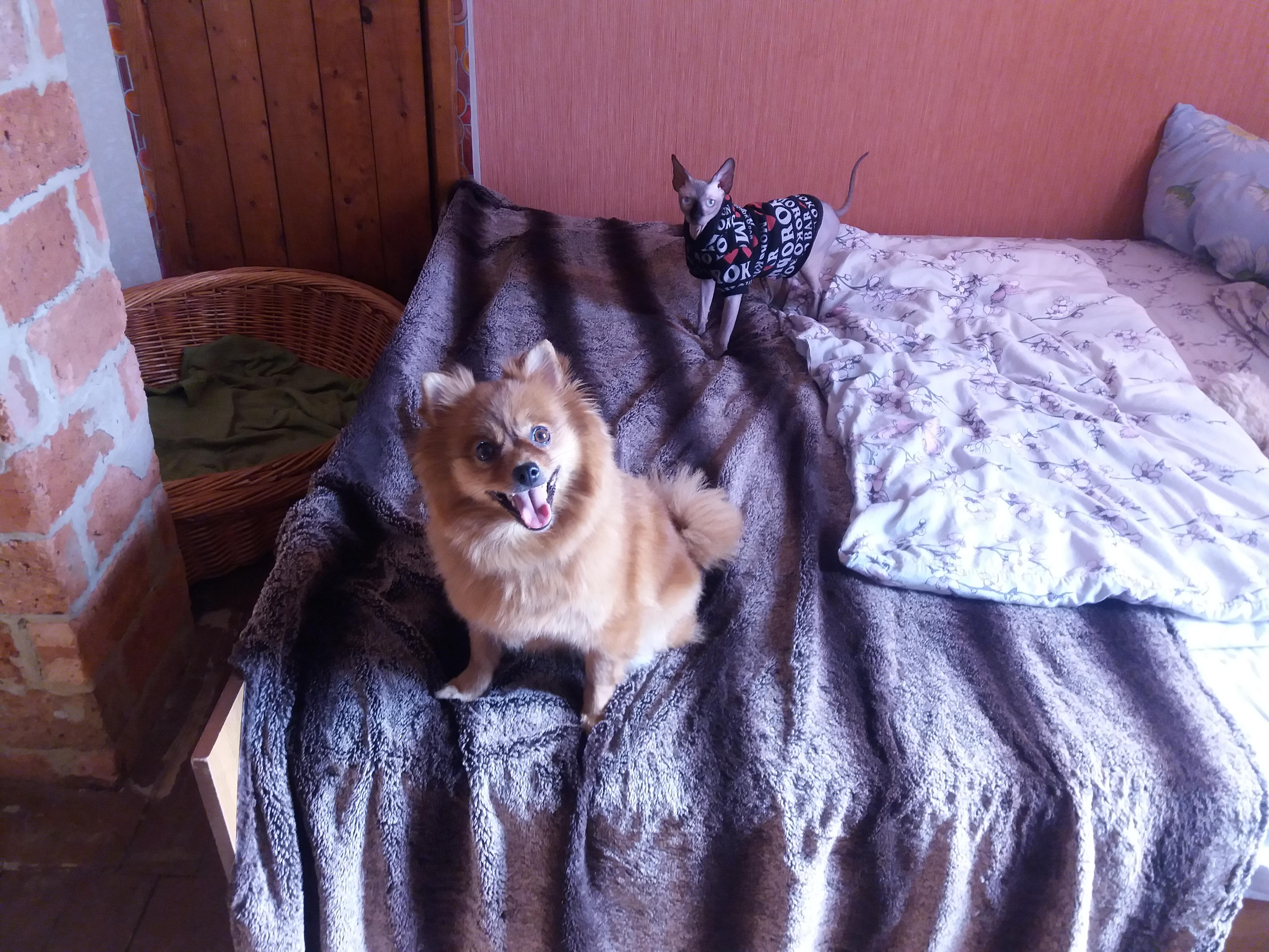 """Фото Малнышня на """"домашнем"""" выгуле... """"гулять"""" пара соизволили только на кровати"""
